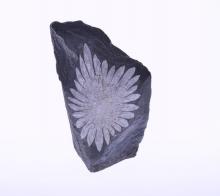Chryzantémový kámen